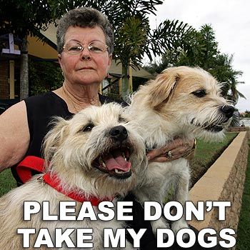 Beverley Stubley would be heartbroken without her dogs Sabu and Maxwell. Photo: Chris McCormack/171194