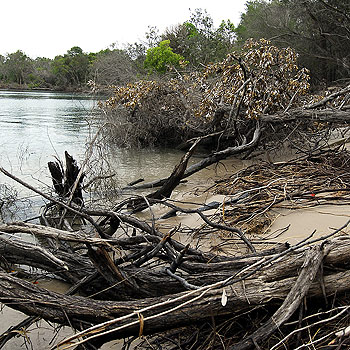The popular dog-walking area at the Noosa  River mouth has been eroded away.