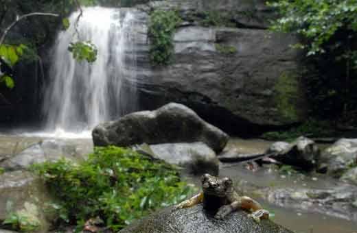 Serenity Falls, Buderim Forest Park. Photo: Warren Lynam /  171956e