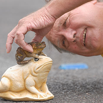 Don Knopke with one of the early favourites to win this year's great toad race at Coolum's Australia Day celebrations. Photo Warren Lynam