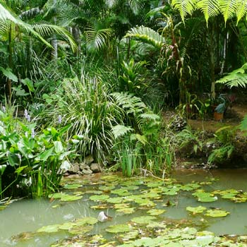 Frogs just love this pond.