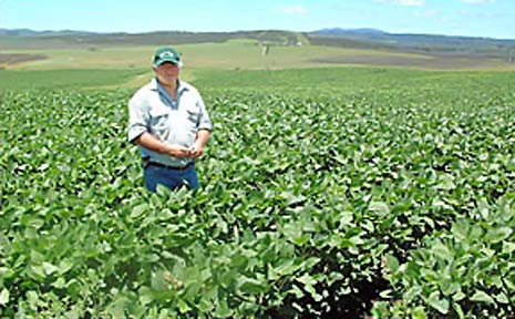 Farmer Stuart Larsson is concerned about the future of his soy farming operation if GM canola and other crops get the green light
