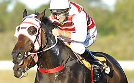 Darron Coleman guides Instructed to victory in the $10,000 Carlton Draught Cup Open Handicap (1310m) at Ballina.