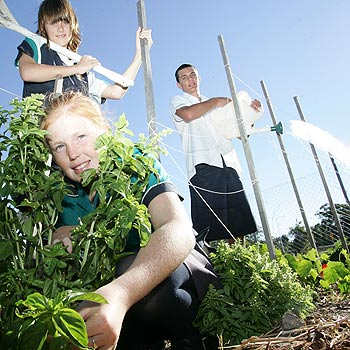Chancellor State College students Tanisha Cunning, 12, Ainslie McCormick, 12 and Corey Morel, 14, tend to the permaculture garden at the school. Students and staff are gearing up for World Environment Day, where they will learn how to make litter-free lunches. Photo: 174822