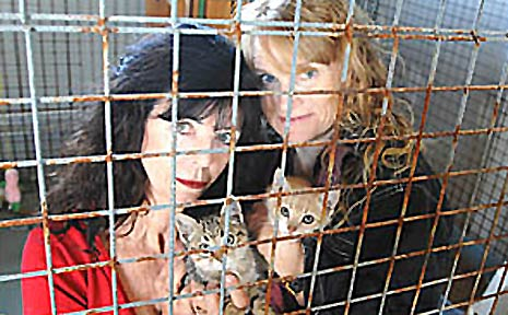 Animal Rights and Rescue Group president Barbara Steffensen (left) and secretary Suzanne Lavis with two of the six kittens abandoned by their owner.