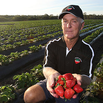 Beerwah strawberry farmer Henry Roy says the rising cost of fuel and fertiliser is making it difficult for farmers to maintain current fresh produce prices. Photo: Michaela O'Neill/174991