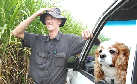 Martin Walsh, of Woodburn, surveys the ready-to-harvest sugar cane crop with the family's dog, Jordan.
