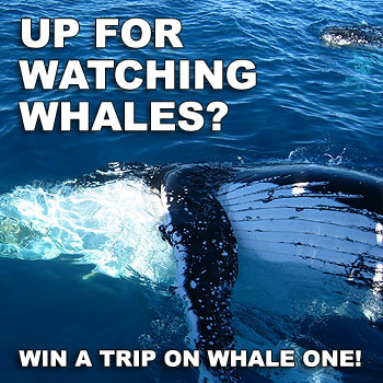 Get your heart pumping and win the experience for yourself as you ride on Steve's Whale One!