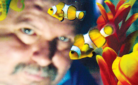 Summerland Aquarium's Manager, Chris Woolley with some of the wonderful clown fish.
