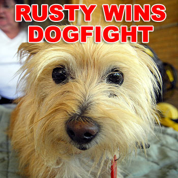 Joan Dyson, the owner of Rusty the 13-year-old terrier, has won a fight to have her beloved pet stay with her in The Grove retirement village complex. Photo: Che Chapman/174380