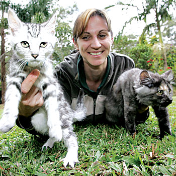 Sunshine Coast Animal Refuge caretaker Wendie Sheather plays with some of the kittens that are available to the public at the moment.   Photo: Chris McCormack  CHRIS MCCORMACK/SUNSHINE COAST DAILY