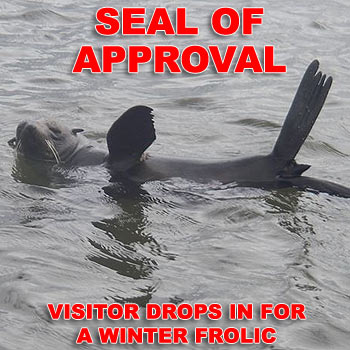 This seal caused quite a stir near the T Boats jetty in Noosaville yesterday. Photo: Contributed by Brian and Linay Hearn.