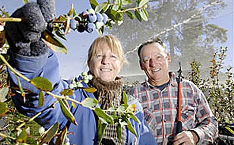 Mountain Blue Orchards Harvests Manager Paul Kilroy and his assistant, Margaret Halliday.