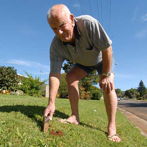 Buderim resident Tim West has trouble keeping the ants away from his lawn and garden. Photo: Warren Lynam/177169