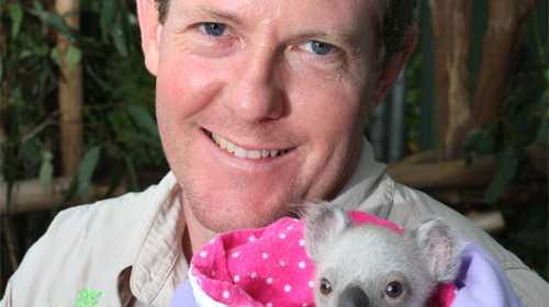 Senior veterinary surgeon at Australian Wildlife Hospital at Australia Zoo, Beerwah, Dr Jon Hanger, checks the condition of Mollie a 6 month old orphaned koala on July 23, 2008. Photo: Nicholas Falconer: 177208.