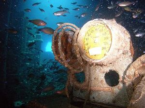 Sunreef plans free dives for anniversary