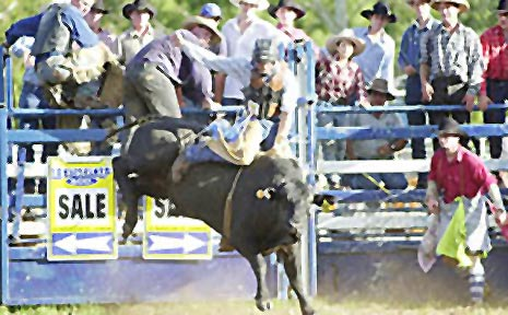 Grevillea's David Kennedy says that it doesn't pay to be scared when you ride a bull in a rodeo.