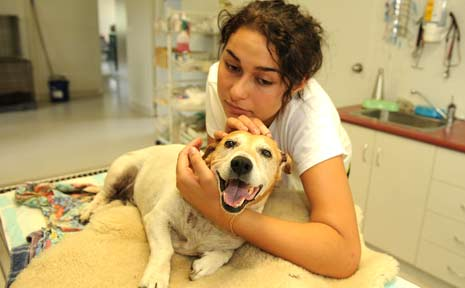 SURVIVED: Nikita Rogers,16, of Barkers Vale, with her 10-year-old dog Rocko at a Kyogle veterinary surgery after her pet was savagely attacked yesterday by three dogs.
