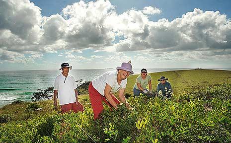 Moonee Beach Landcare workers on Green Bluff.