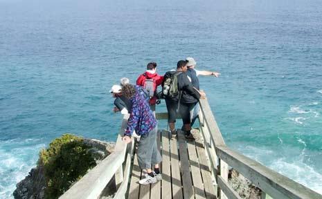 Play spot the marine mammal at points along the Great Ocean Walk.