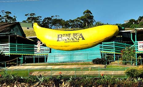 Coffs Harbour's iconic Big Banana has been voted as Australia's favourite 'big' attraction.