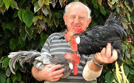 Coffs Coast bantam breeder John Arnett with some of his favourites.