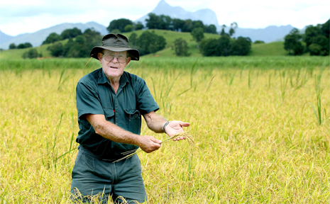 CANE farmer Graham Martin shows his first crop of rice.