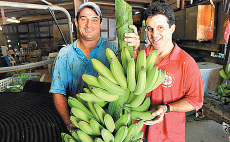 BANANA farmer David Tate and fellow grower Sandro Franco aren't excited about the prospect of competing with foreign bananas.