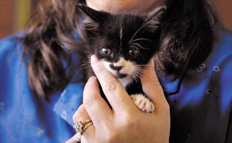 Christine Rosenblatt with Ebony, the homeless kitten she adopted yesterday after reading in the Daily Mercury about eight kittens left for dead in a cardboard box at South Mackay over the Easter weekend.