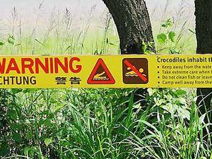 Crocodile at Slade Point