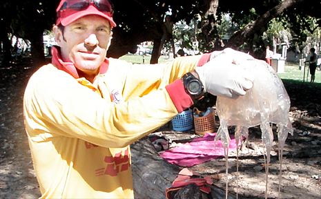 Eimeo Beach volunteer surf lifesaver Alan Zamparutti holds up the giant box jellyfish caught at low tide, in 30cm of water.