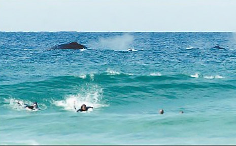 PASSING TRADE: Surfers and whales share the water at Tallow Beach.