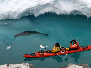 Check out nature in Antarctica