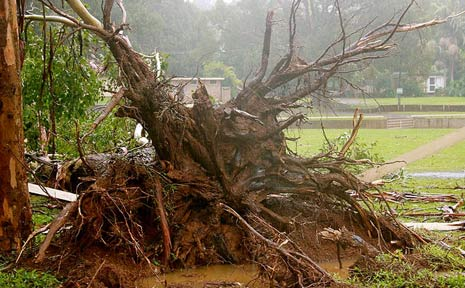 The damage has been far and wide across the Northern Rivers.