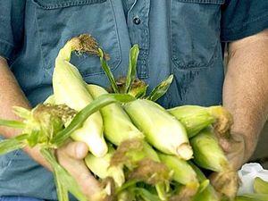 Help plot to find new organic gardeners on Kiwi property