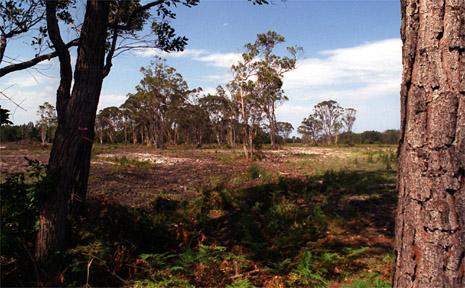 Leda's Kings Forest site.