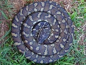 Fangs for nothing - court guards find snake in purse