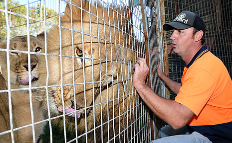 Coast councillors want to hear both sides of the debate first-hand before they decide the future of circuses that use exotic animals.