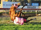 ALL THE ACTION: Jockey Ashley Butler somersaults from his horse at the winning post in a race at the Rockhampton Cup Race Day at Callaghan Park on Saturday. He was lucky to walk away almost unhurt.