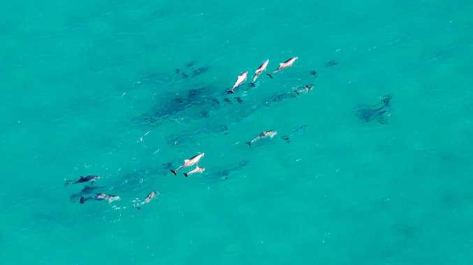 Dolphins head toward Double Island Point in the crystal clear waters of the Coral Sea.