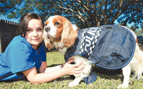 LUCY Saunders, a vet nurse from King Street Veterinary Clinic in Murwillumbah, with Badger in his police dog costume.