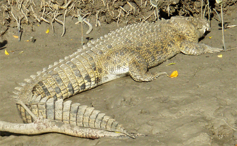 The Constant Creek croc was about four metres long and was within 100 metres of the boat ramp.