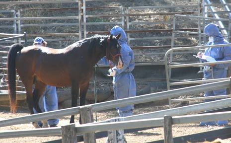 A horse has died from the Hendra virus in Macksville.
