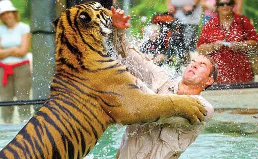 Australia Zoo has sacked 22 employees.