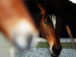 Fears horses could have been poisoned
