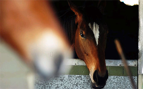 Twenty one horses have died mysterious deaths in the Gold Coast hinterland.