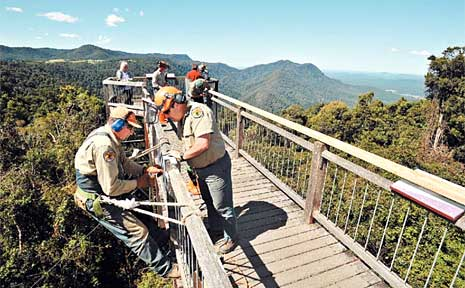 National Parks and Wildlife Service workers Les Bravery and Lance Meakins hard at work on the Dorrigo Skywalk.