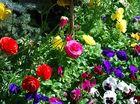 Festive finale to Carnival of Flowers