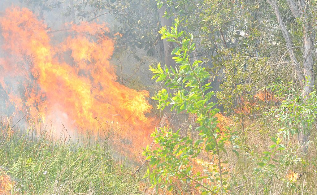 Firefighters on the Northern Rivers are busy battling a bushfire in the Nimbin Rocks area.