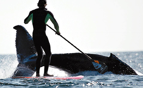 WORLD champion stand-up paddle boarder Jamie Mithcell had an encounter with whales near Cook Island on Monday.